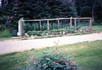 Garden beside by chicken coop